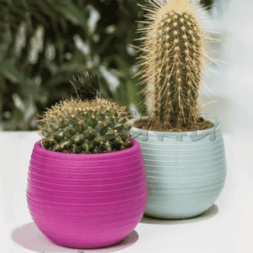 Мини саксия за кактуси и ниски разстения
