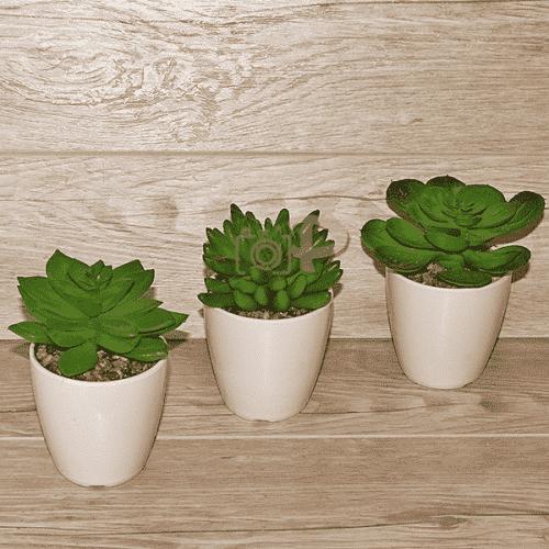 Декоративен кактус в саксия/изкуствени цветя за декорация