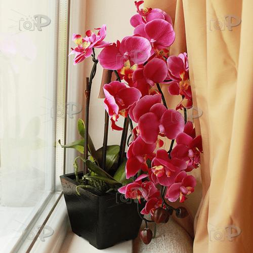 Изкуствена орхидея в саксия 38см.