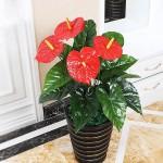 Изкуствено цвете за саксия Антуриум/цветя за декорация